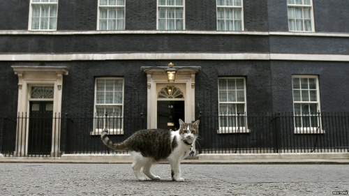 Larry, le chat du 10 Downing street.jpg