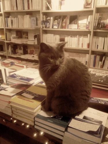 chat librairie.jpg