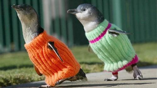 rex_penguin_sweaters_ll_111020_wblog.jpg