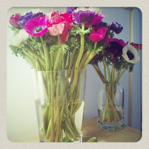 anemones.jpg