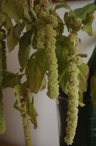 bouquet tubereuse12.JPG
