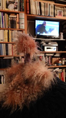 Odette 7 regarde le journal d'Arte.JPG