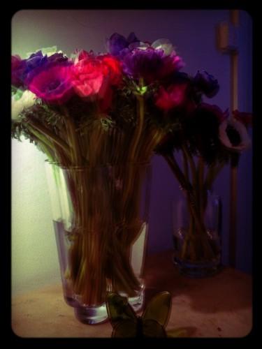 anemonespush.jpg