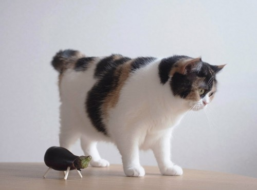 aubergine1.jpg