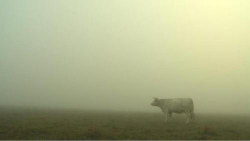 bovines_brume_coyright_bathysphere.jpg