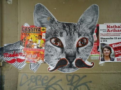 chat pass. des petites écuries.JPG